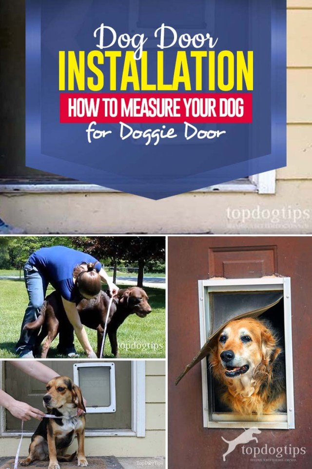 Tips on How to Measure Your Dog for Dog Door Installation