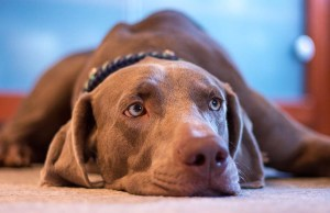 7 Most Common Signs of Anxiety in Dogs