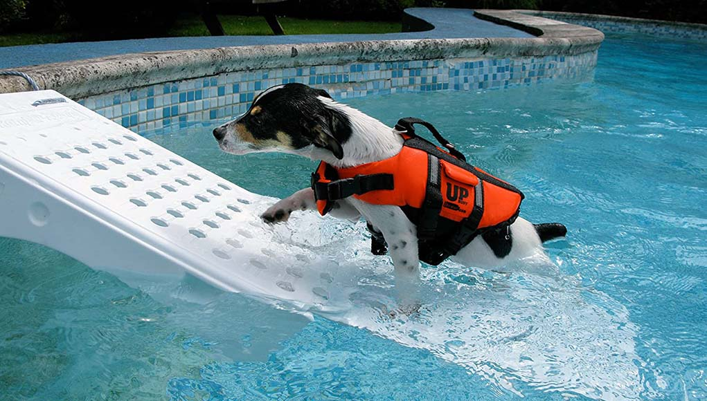Best Dog Pool Ramp Picks of This Year