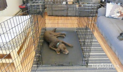 Metal or Wire Crates for Dogs