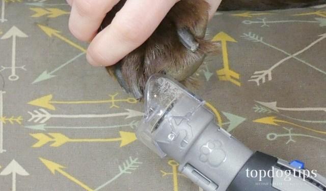 Dremel PawControl Dog Nail Grinder Review
