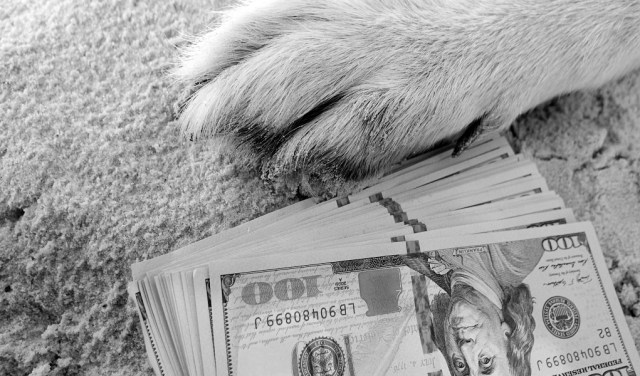 7 Tips to Save Money On Pet Supplies During COVID-19 Pandemic