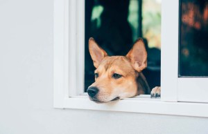 10 Ways to Treat Separation Anxiety in Dogs