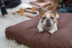 K9 Ballistics Tough Rectangle Nesting Dog Bed