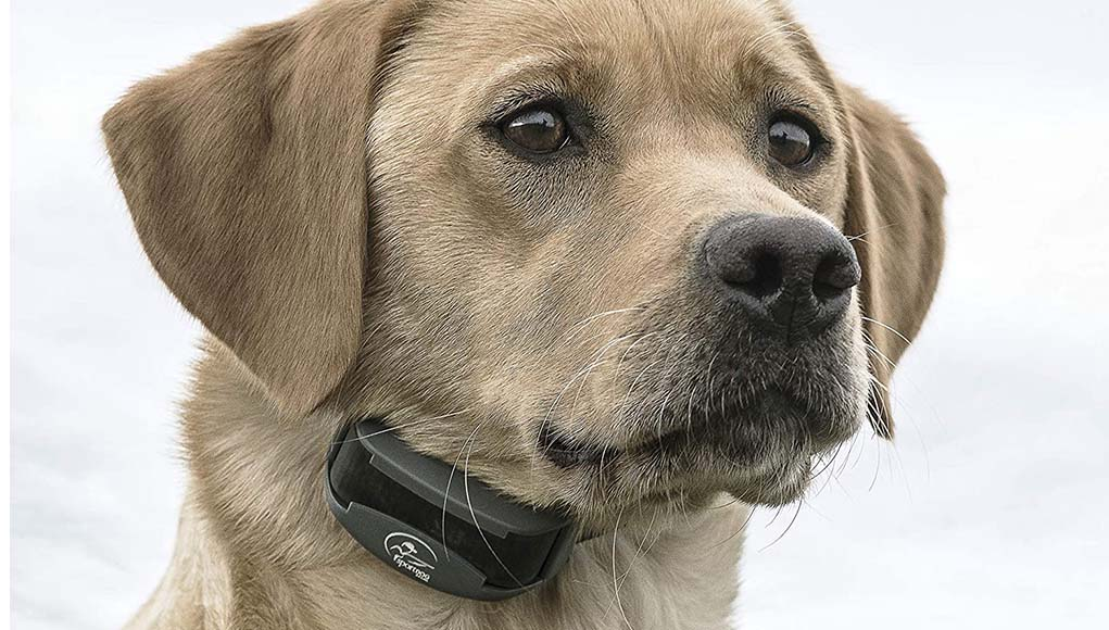 Best Electric Dog Collars of 2020