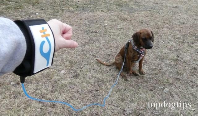 Coastal Hound Dog Leash Giveaway
