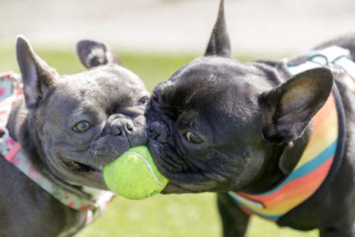Doggy Playmates and Play Dates