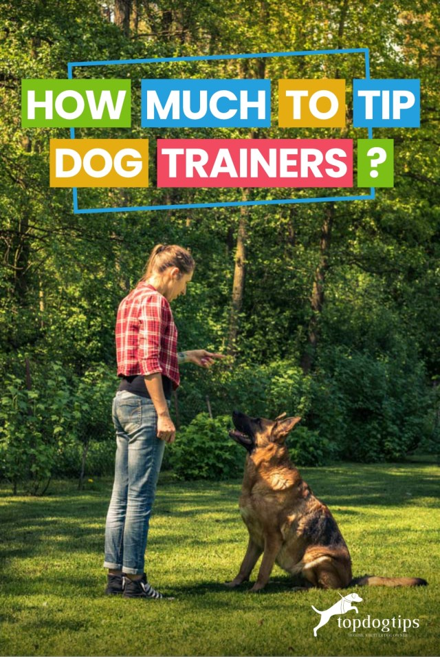 How Much to Tip Dog Trainers-