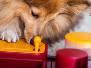 How to Pick Mentally Stimulating Toys for Dogs