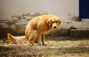 My Dog Has Bloody Diarrhea - Causes and Treatment