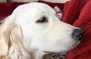 Nasal Discharge in Dogs - Causes and Treatment