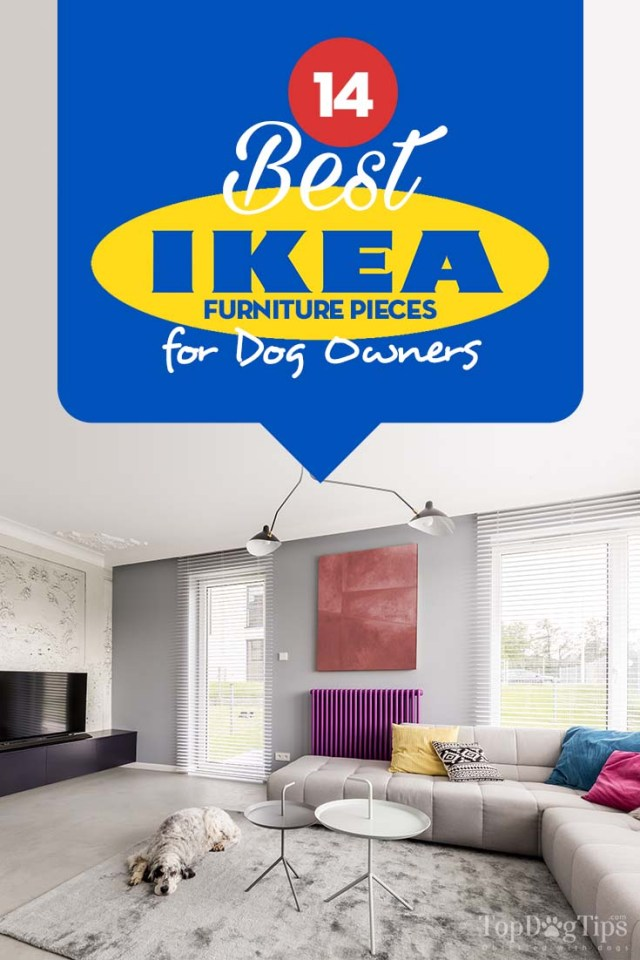 The Best IKEA Dog Furniture and Pet Supplies