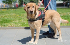 how to make your dog a service dog