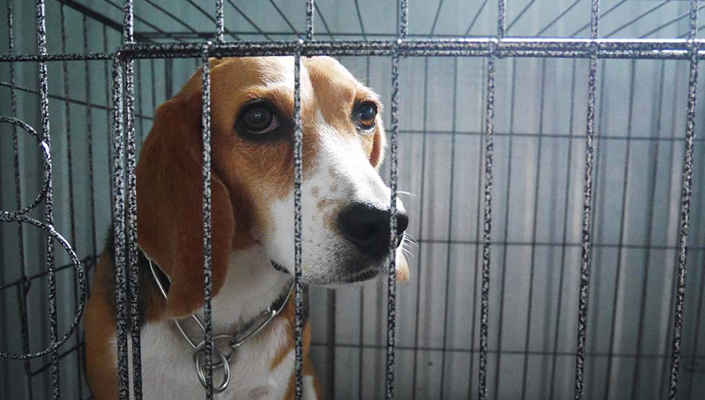 9 Upsetting Truths About Dogs in Laboratory Experiments