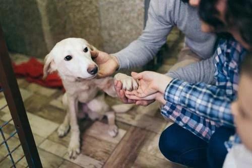 Family Adopting Dog