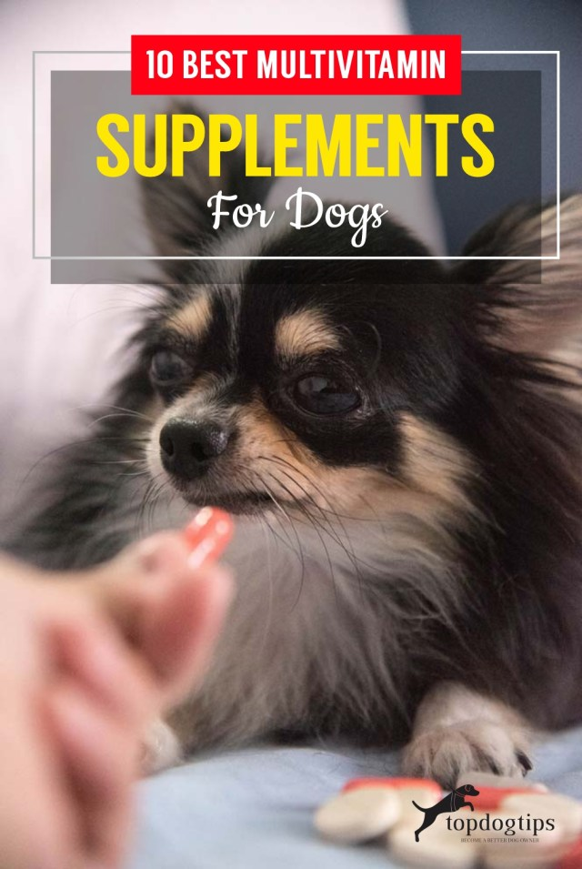 10 Best Multivitamin Supplements For Dogs