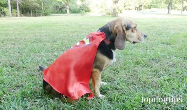 DIY Dog Costume Ideas