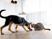 Is Cat Food Bad For Dogs?