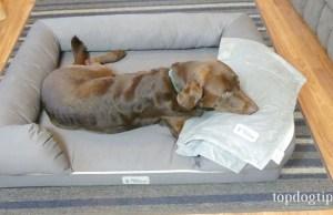 PetFusion Dog Bed