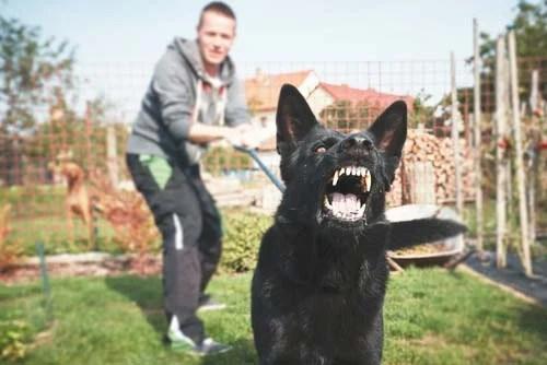 aggressive dog attacking