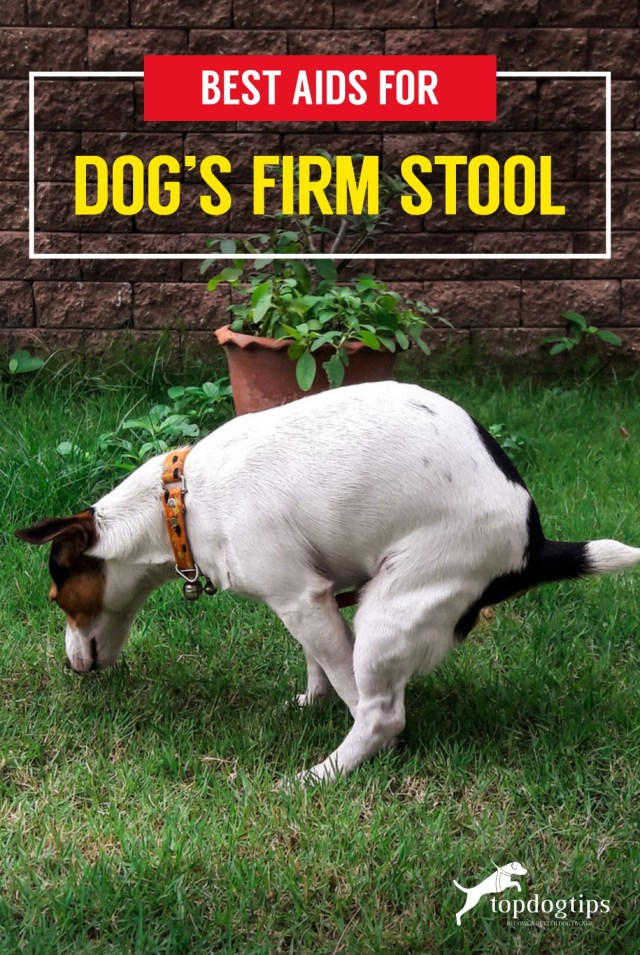 Best Aids For Dog-s Firm Stool