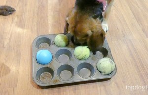 DIY Slow Feeder for Dogs
