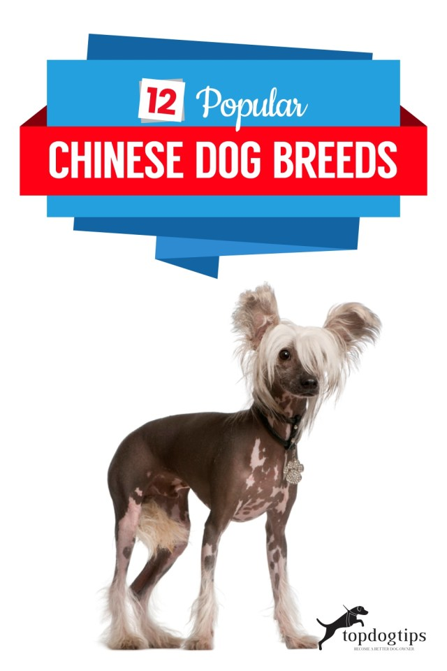 12 Popular Chinese Dog Breeds