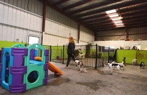 Dog Boarding Costs- Different Plans and Costs Explained