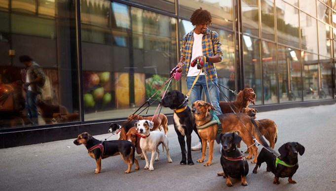How Much Does a Dog Walker Cost? Everything You Need to Know