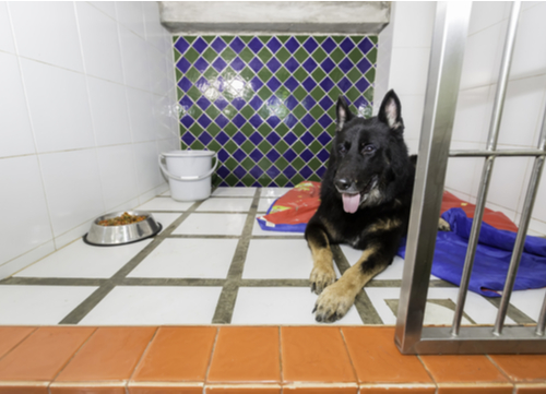 dog in his own boarding room