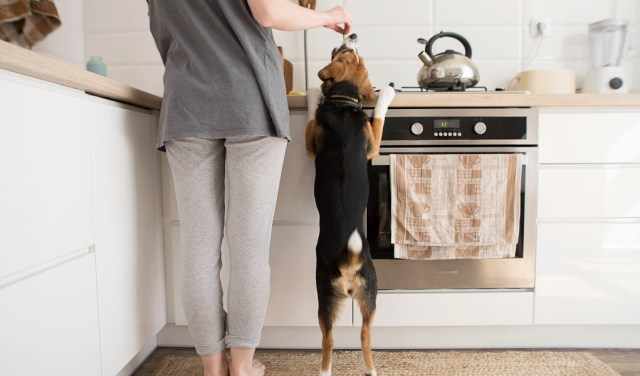 How To Make Dog Food Cheaply