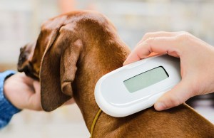 What Will It Cost to Microchip a Dog?