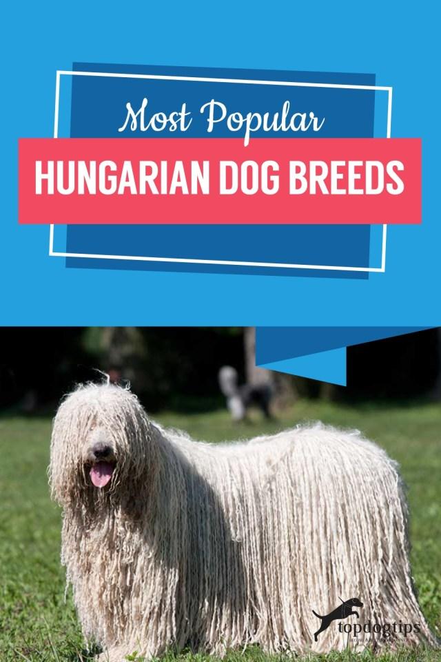 Most Popular Hungarian Dog Breeds