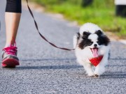 Seventeen of the Healthiest Medium and Small Dog Breeds