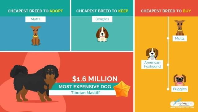 Affordable Dog Breeds