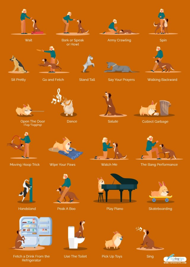 Difficult Tricks to Train Dogs