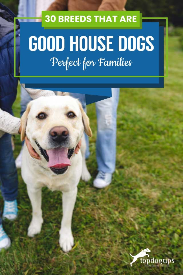30 Breeds That Are Good House Dogs - Perfect for Families