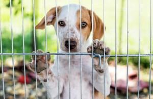 DIY Dog Fence