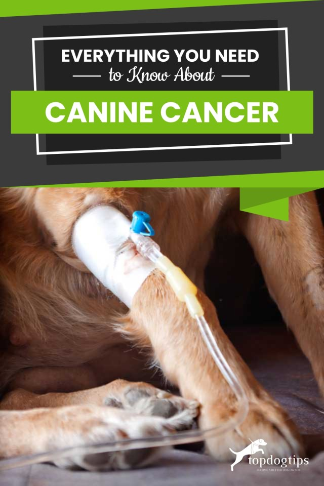 Everything You Need to Know About Canine Cancer