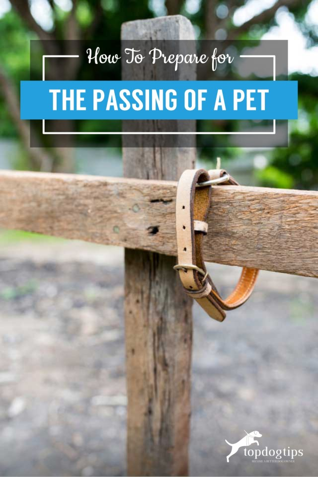 How To Prepare for the Passing of A Pet