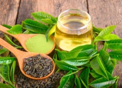 herbal remedies for dogs Green Tea