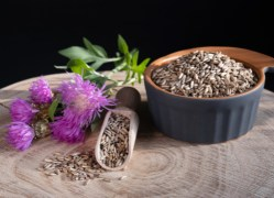 herbal remedies for dogs Milk Thistle