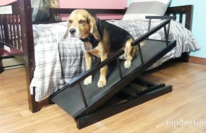 Chasing Tails Height Adjustable Dog Ramp