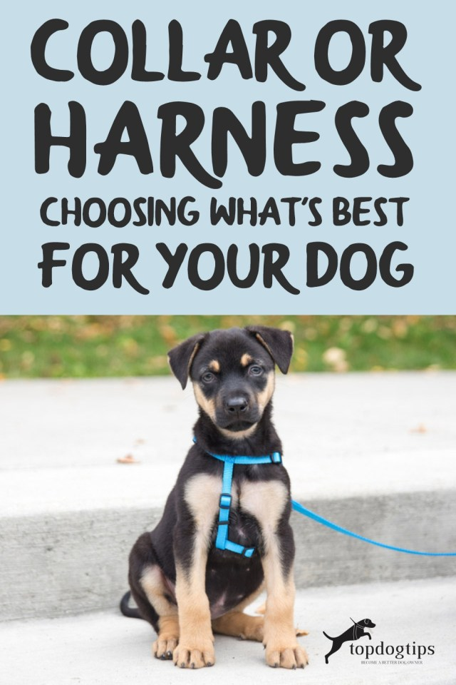 Collar or Harness (Choosing What-s Best For Your Dog)