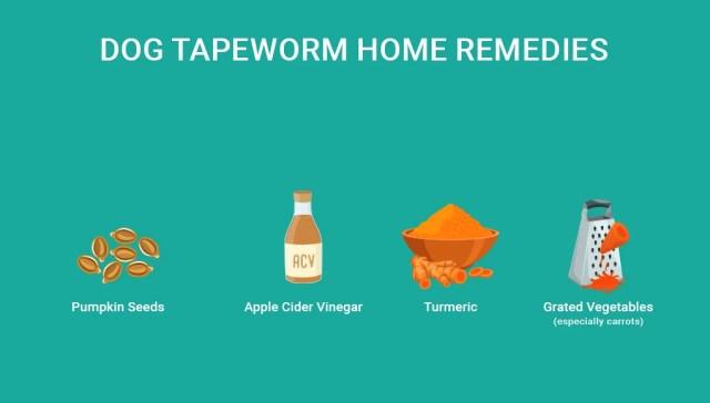 Dog Tapeworm Home Remedies- 4 Safe Options 1