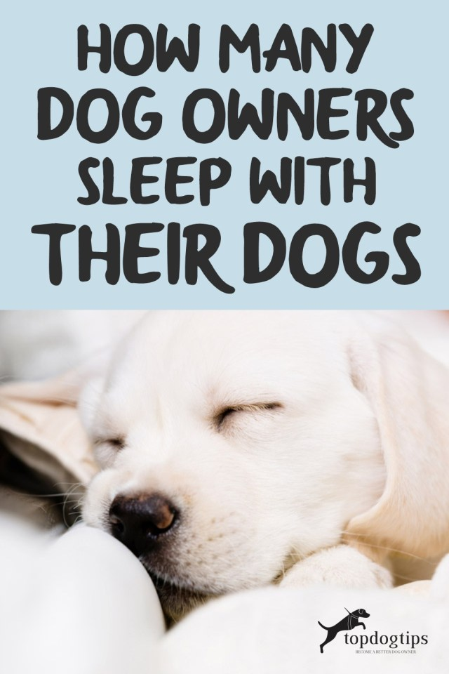 HOW MANY DOG OWNERS SLEEP WITH THEIR DOGS