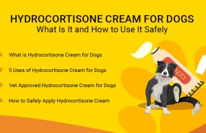 Hydrocortisone Cream for Dogs- What Is It and How to Use It Safely