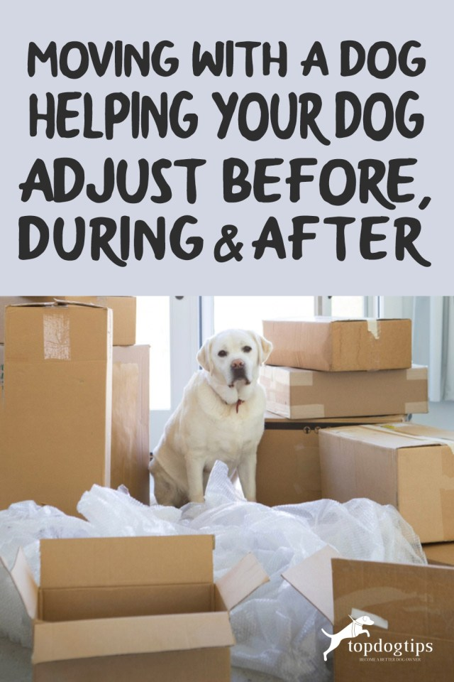 Moving With a Dog _Helping Your Dog Adjust Before, During - After