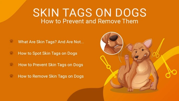 Skin Tags on Dogs- How to Prevent and Remove Them