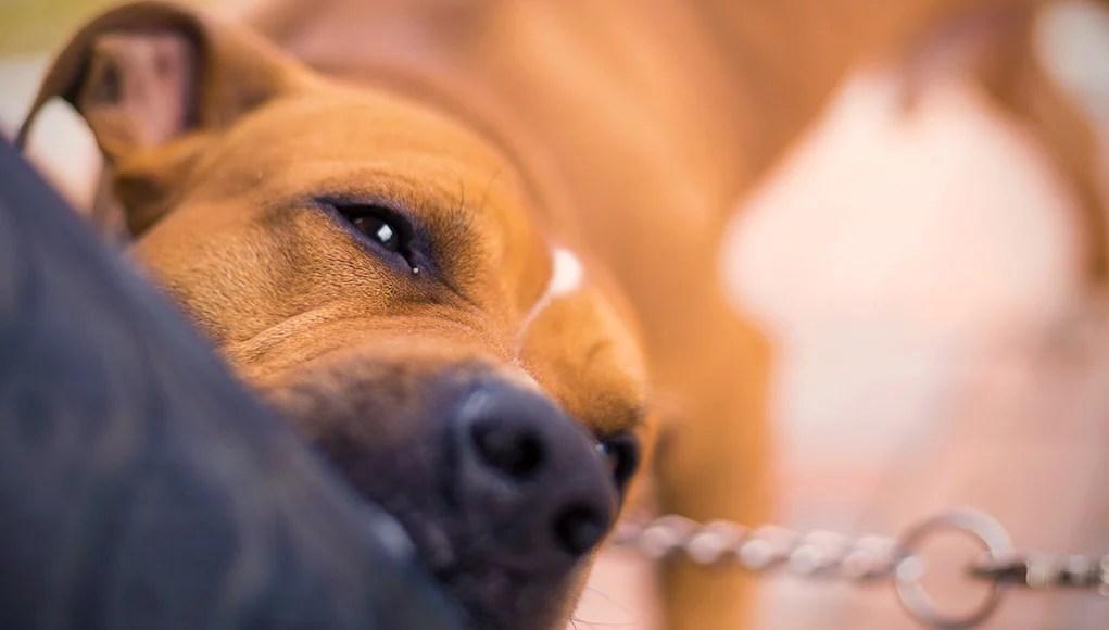 US Statistics on dog bites